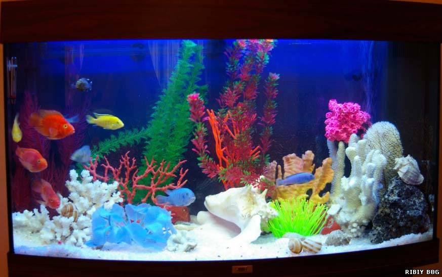 Декор аквариума водорослями