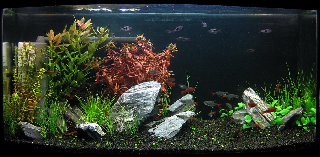Грунт для аквариума с живыми растениями своими руками 29