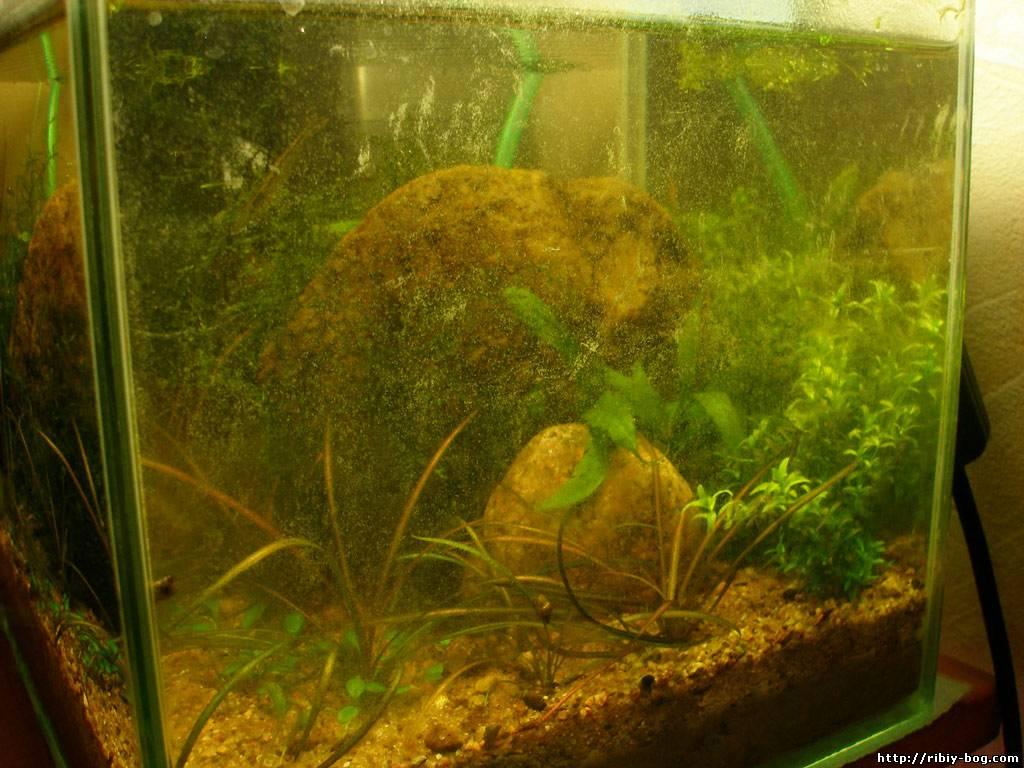 Размещение-растений-в-аквариуме