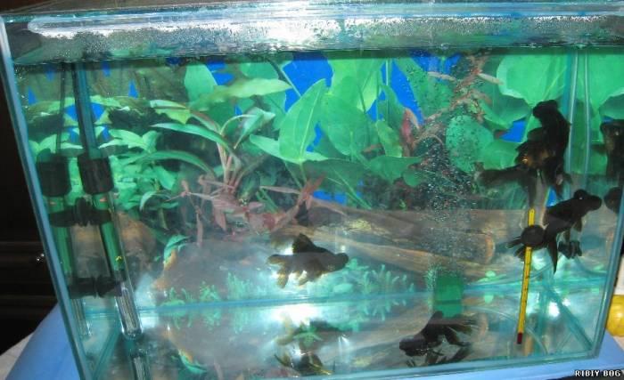 Растений в аквариуме растения